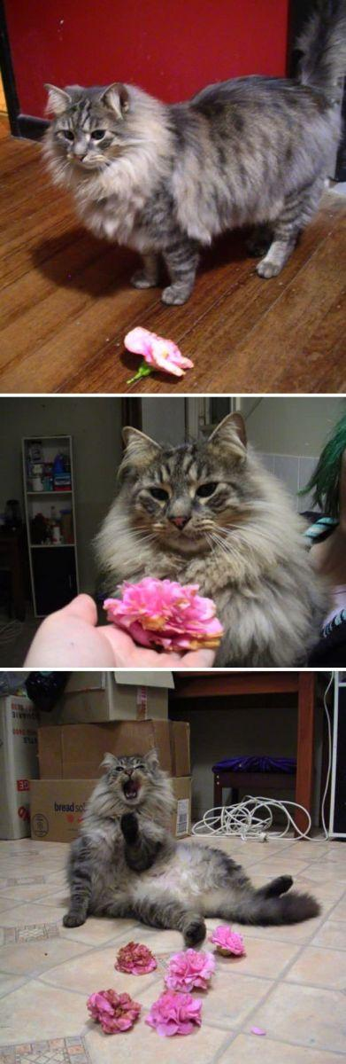 This Is Mr. Slash - A Flower Hunting Adventure Master. He Brings Me Flowers Every Night. He