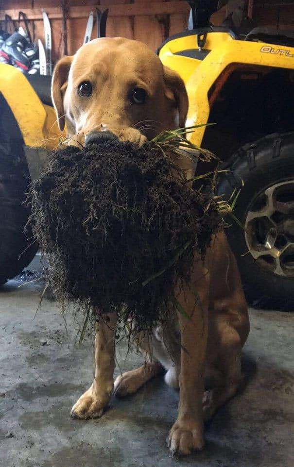 My Dog Brought Me Some Dirt Today
