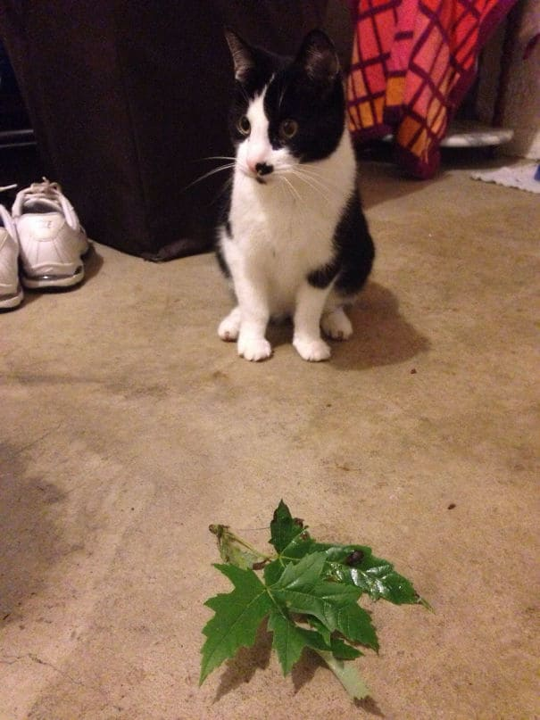 Instead Of A Dead Bird Or Mouse, My Cat Decides To Bring Us Gifts Of Leaves. She