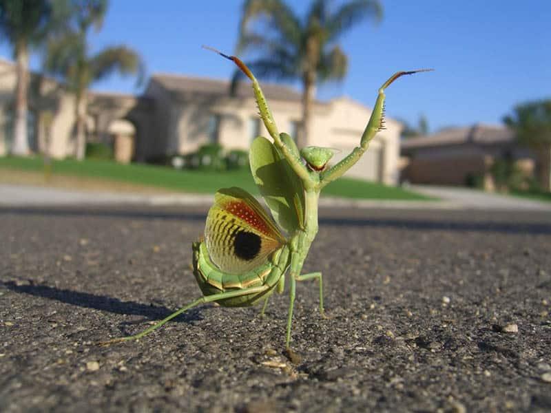mantis_by_hey_its_laura.jpg