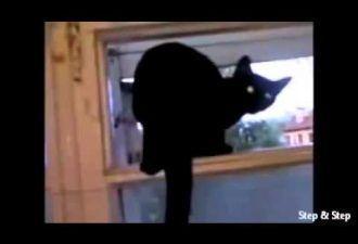 Кот который гавкал форточку